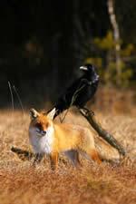 el zorro y el cuervo